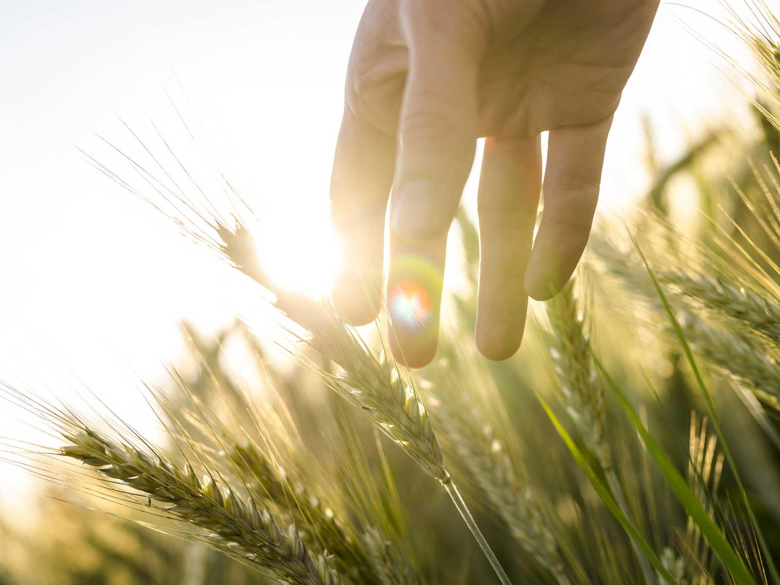 Schöne neue Landwirtschaft? Die Bayer-Monsanto-Fusion