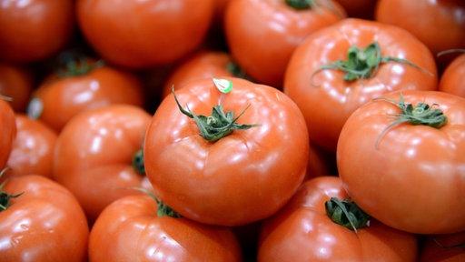 Blutige Tomaten – Harte Erntebedingungen in Italien